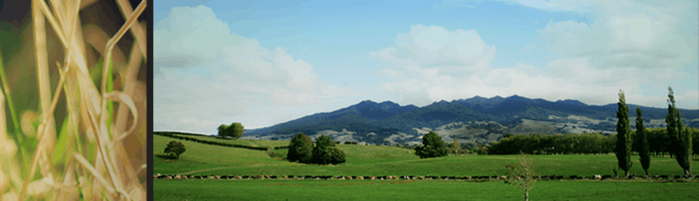 Te Pahū Community Website