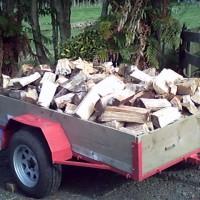 For Sale Fire Wood - Split Pine